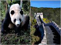 Great Wall and Pandas