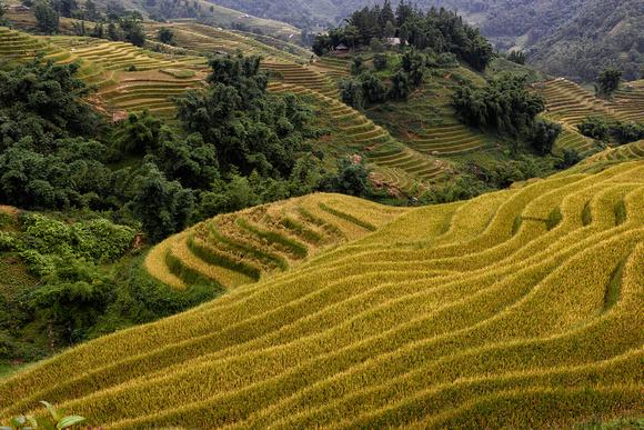 Muong Hoa Valley, Sa Pa, Lào Cai Province